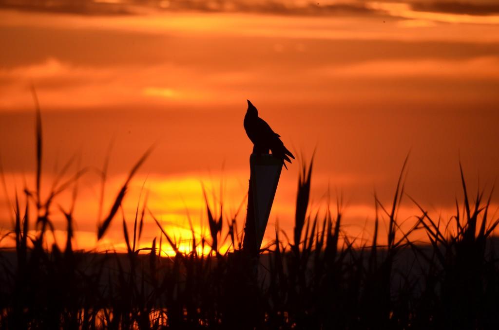 Sonnenuntergang Juni 2015